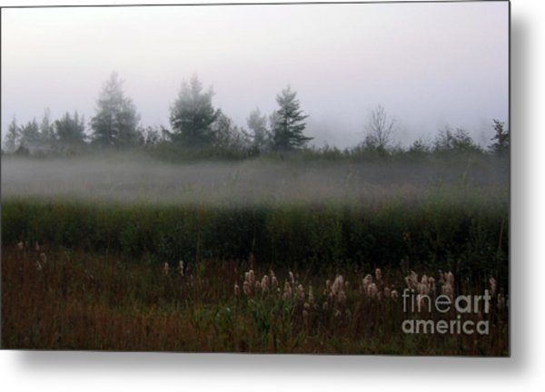 Fog Line Above Woodland Metal Print by Andre Paquin