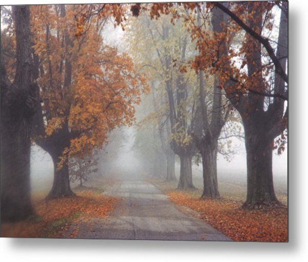 Foggy Driveway Metal Print