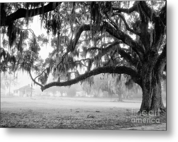 Foggy Morning On Coosaw Plantation Metal Print