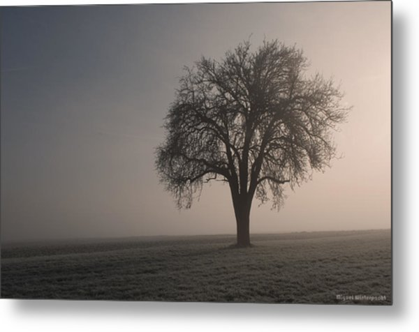 Foggy Morning Sunshine Metal Print