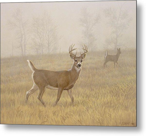 Foggy Morning-whitetail Metal Print