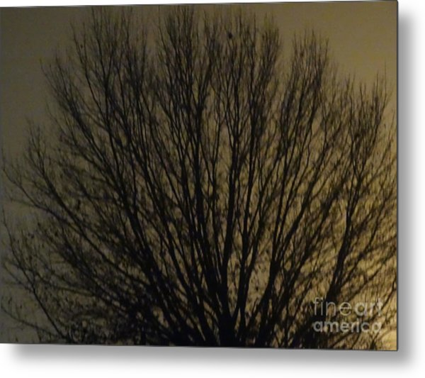 Foggy Tree Metal Print