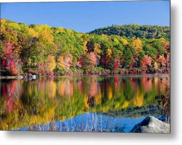 Foilage In The Fall Metal Print