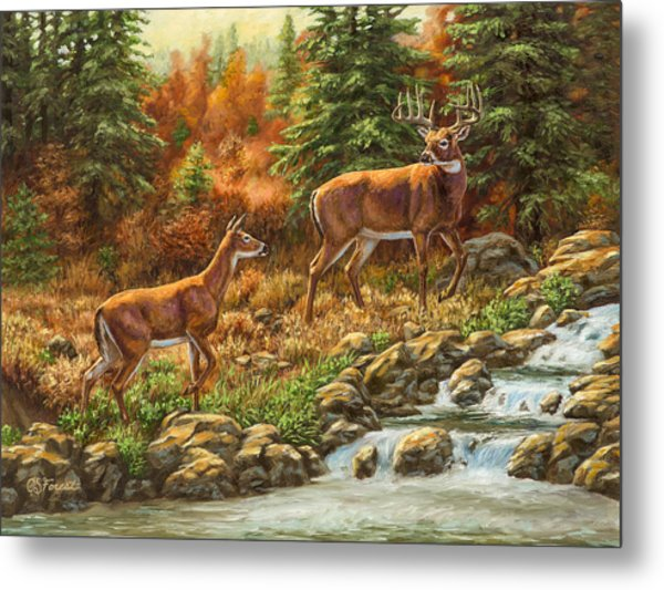Whitetail Deer - Follow Me Metal Print