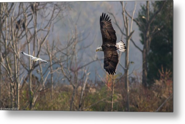 Follow The Leader  Metal Print by Glenn Lawrence