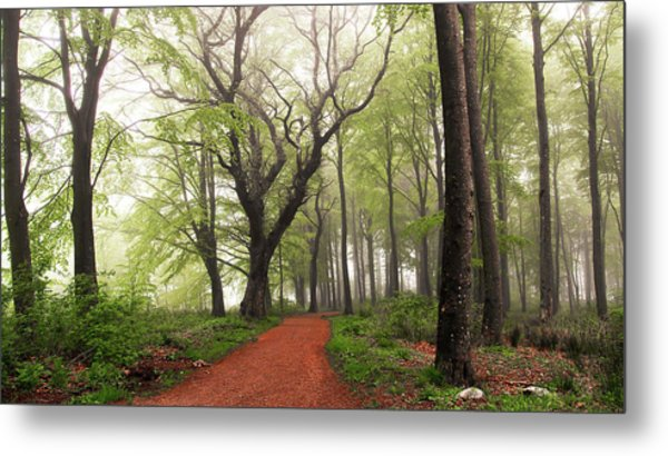 Follow The Red Path. Metal Print