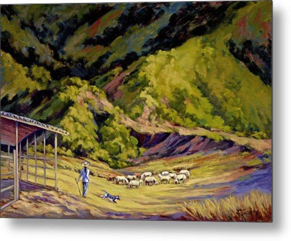 Foothill Sheepherder Metal Print