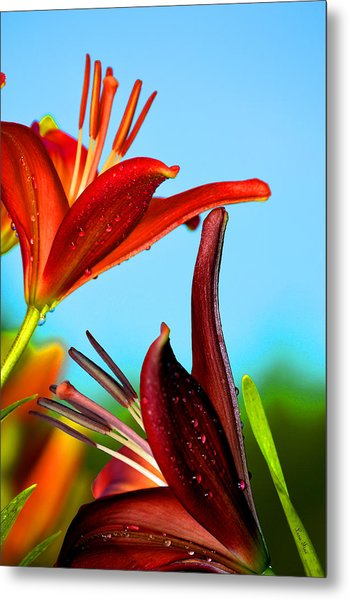 For The Love Of Lillies Metal Print