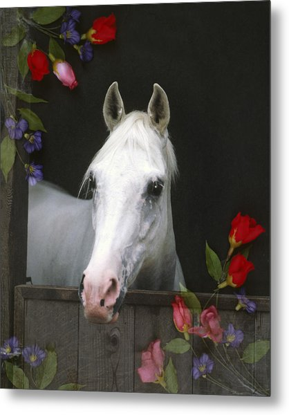 For The Roses Metal Print