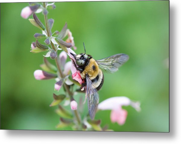 Foraging For Nectar Metal Print