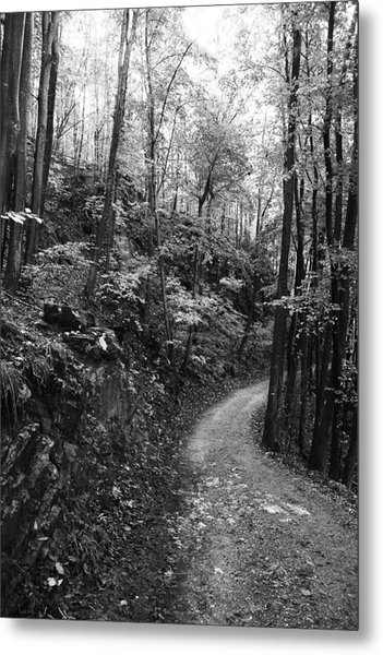Forest Black And White 12 Metal Print by Falko Follert