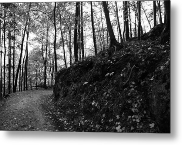 Forest Black And White 5 Metal Print by Falko Follert