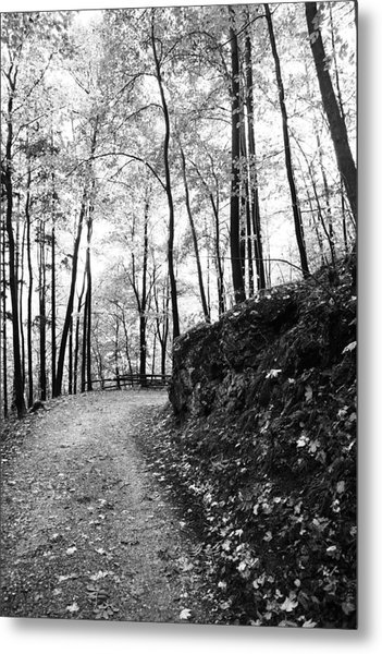 Forest Black And White 6 Metal Print by Falko Follert