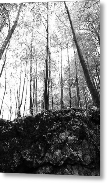Forest Black And White 7 Metal Print by Falko Follert