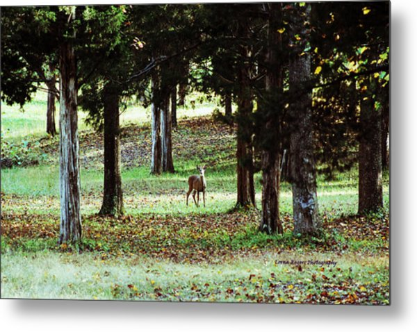 Forest Buck Metal Print