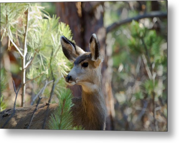 Forest Doe Metal Print