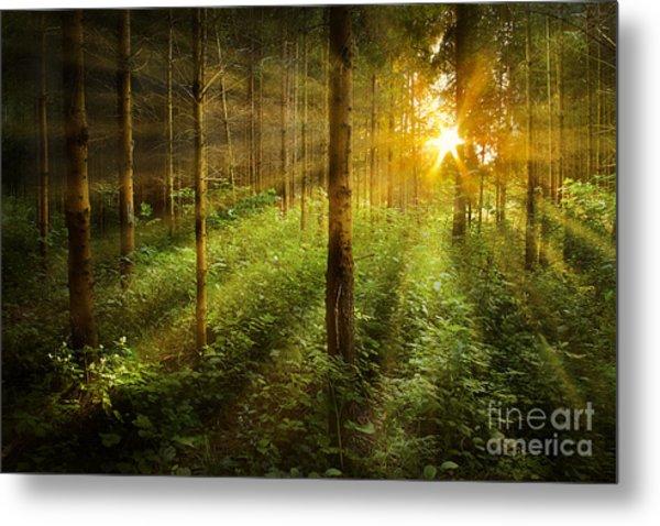 Forest Fairytale Metal Print by Bernadett Pusztai