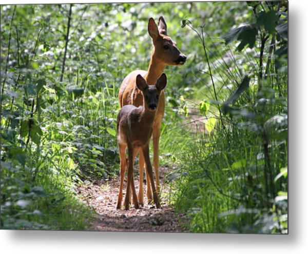 Forest Fawn Metal Print by Ger Bosma