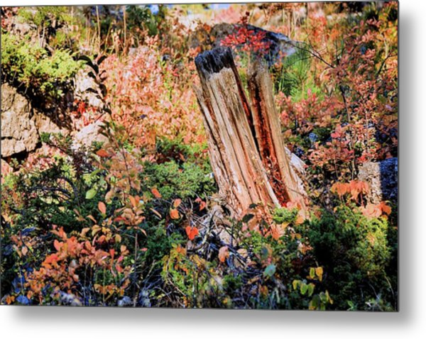 Forest Floral Metal Print