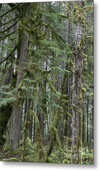 Forest Green  Metal Print by Tim Rice