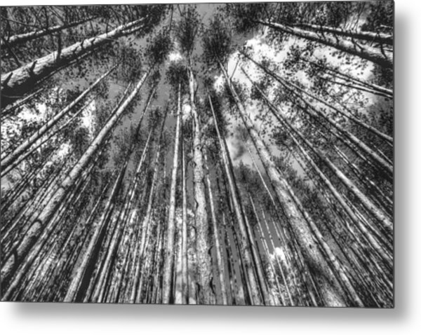 Forest Guards Metal Print