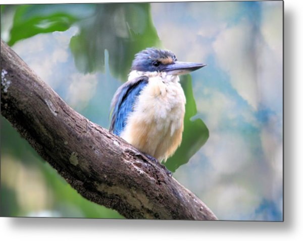Forest Kingfisher Metal Print