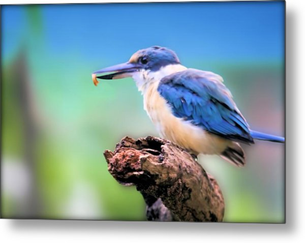 Forest Kingfisher With Breakfast Metal Print