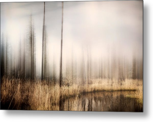 Forest Of Maine Metal Print
