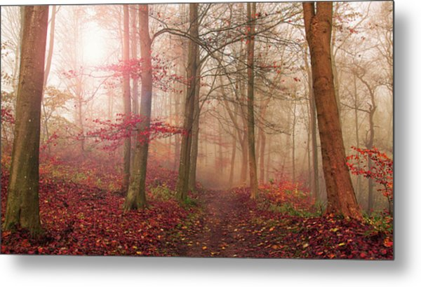 Forest Scene. Metal Print by Leif L??ndal