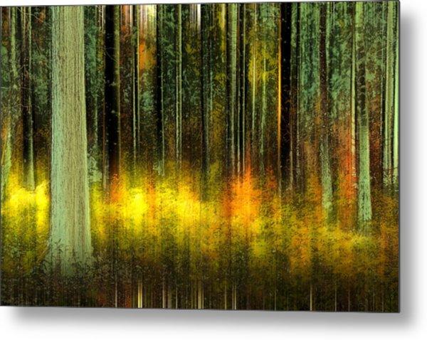 Forest V Metal Print