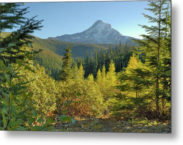 Forest View Metal Print by Arthur Fix