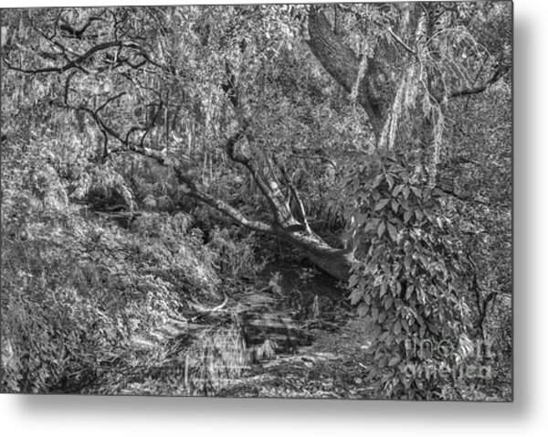 Forest View Metal Print by Mina Isaac