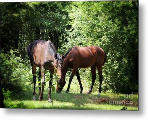 Forest Visitors Metal Print