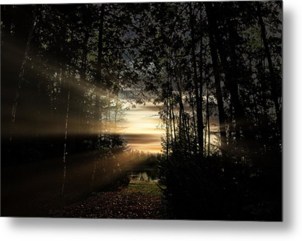 Forest Walkway Metal Print