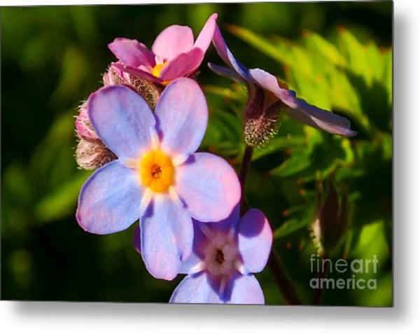 Forget-me-knots Metal Print