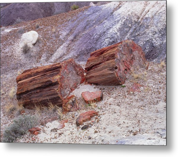 Fossilised Trees In Petrified Forest National Park Metal Print