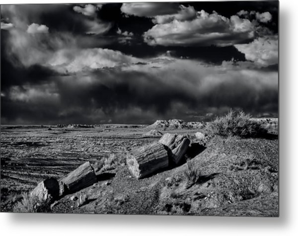 Fossilized And Petrified Trees Metal Print