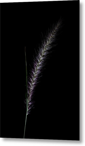 Fountain Grass Spike Metal Print