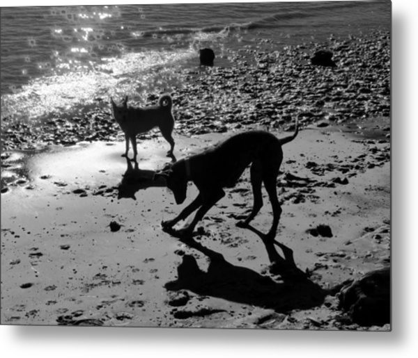 Dog Magic Metal Print