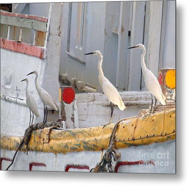 Four Egrets Watch For Fish Metal Print