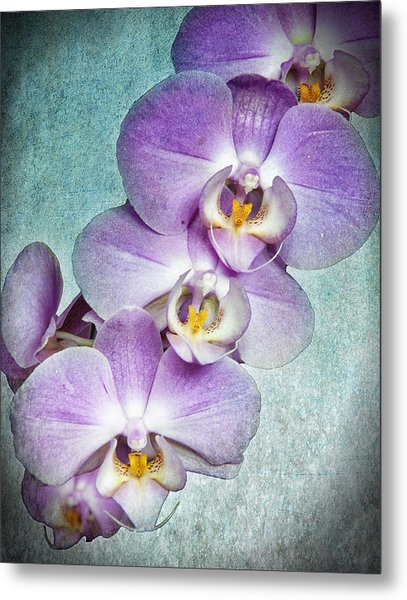 Four Little Orchids Metal Print