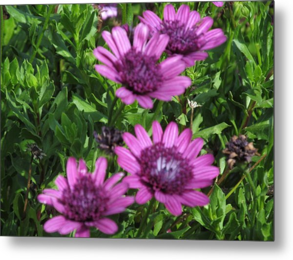 Four Purple Flowers Metal Print