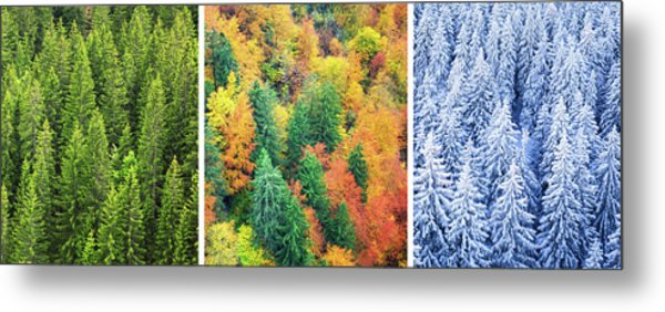 Four Season Forest Metal Print by Borchee