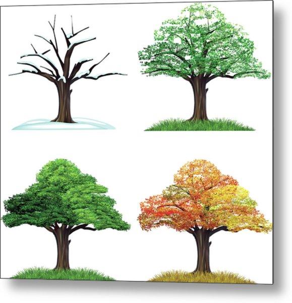Four Season Tree Metal Print by Sceka