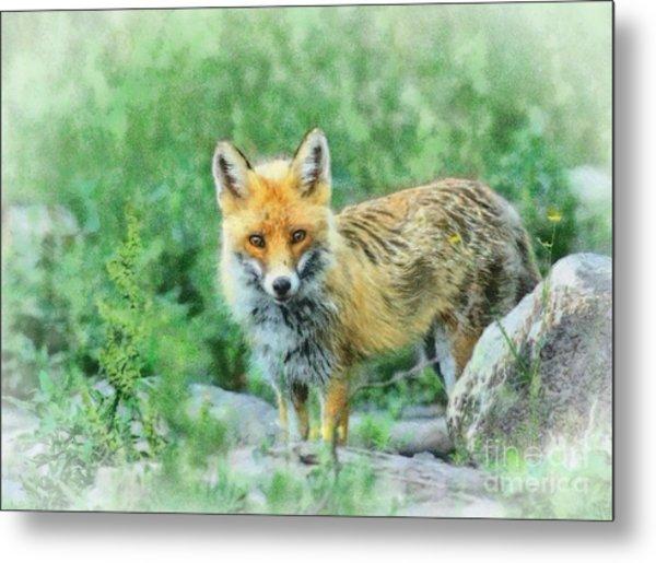 Fox In The Rocks Metal Print by Czesznak Zsolt