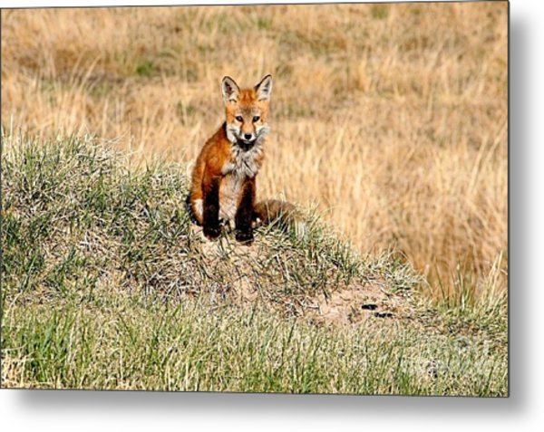 Fox Kit Metal Print