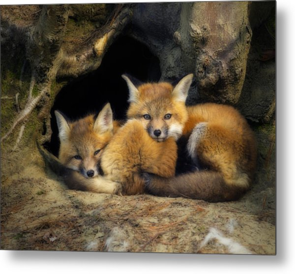 Best Friends - Fox Kits At Rest Metal Print