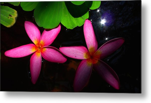 Frangipani Flowers On Water Metal Print