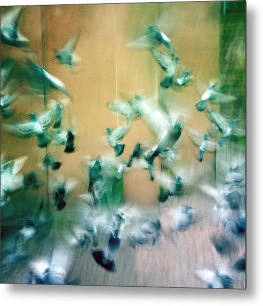 Frantic Wing Beats - Many Scared Pigeons Metal Print
