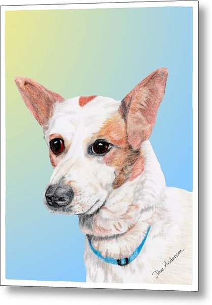 Freckles A Former Shelter Dog Metal Print by Dave Anderson